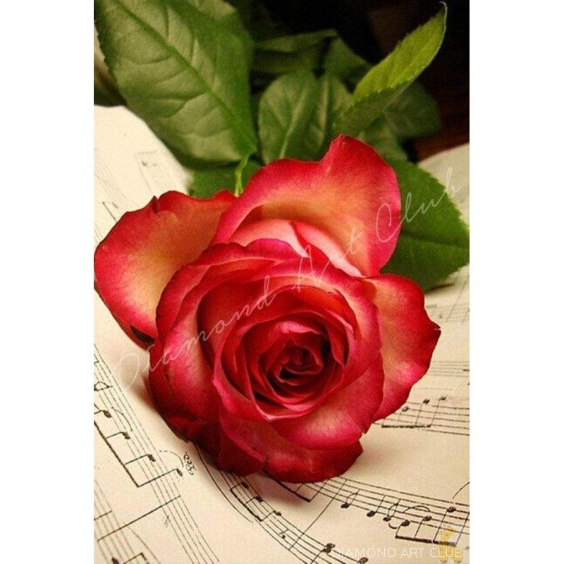 Rose Music Sheet Dia...